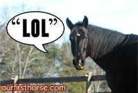 Horse Sayings