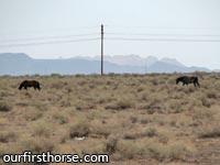 Wild Horses of Maricopa Arizona