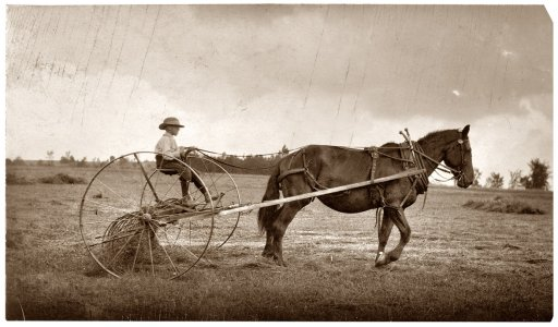 Kid on a hay rake