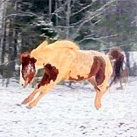 Snow romp
