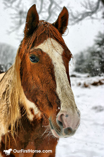 HDR photo of our horse against snow
