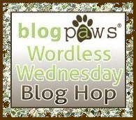 BlogPawsWed