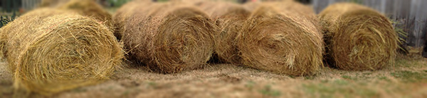 Yard full of hay